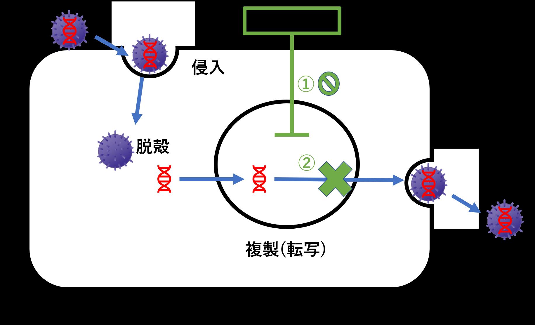 ゾフルーザ(バロキサビル)はmRNAの合成を阻害するインフルエンザ治療薬