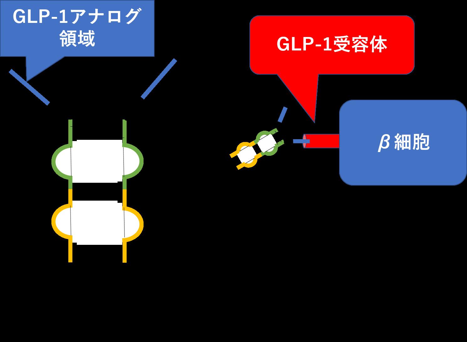 体 glp 薬 受容 1 作動