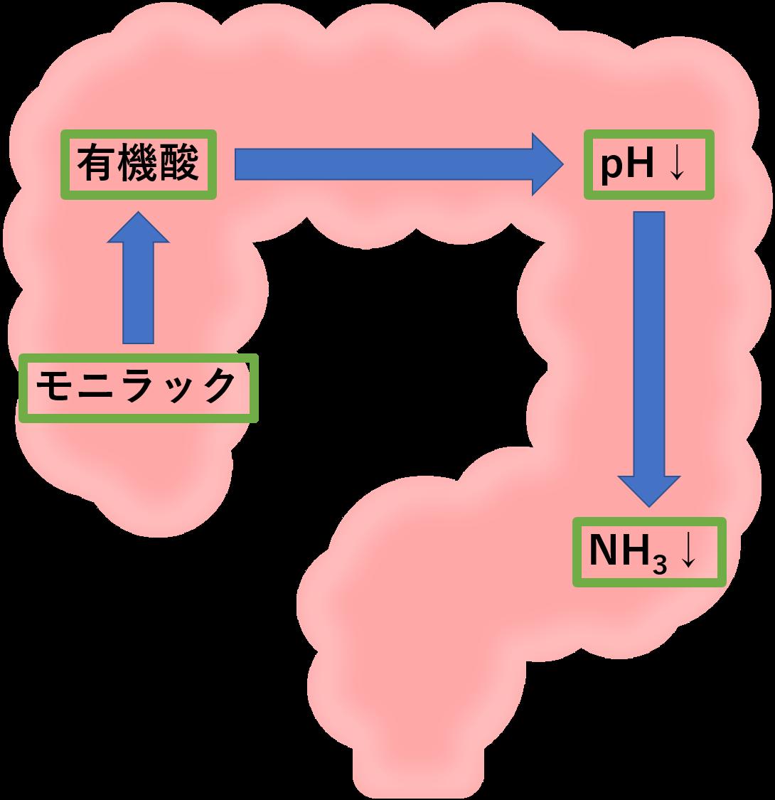 性 脳症 アンモニア 肝