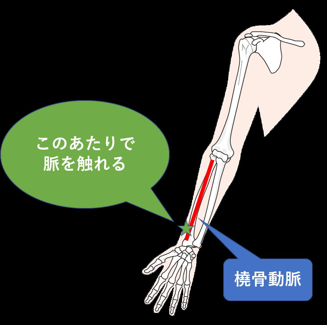 脈拍の基本、頻脈と徐脈